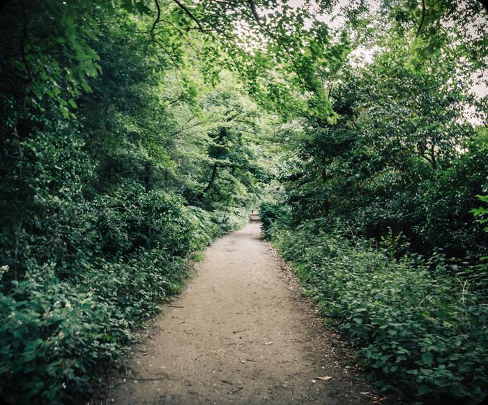 Chris Gibson Park Trail